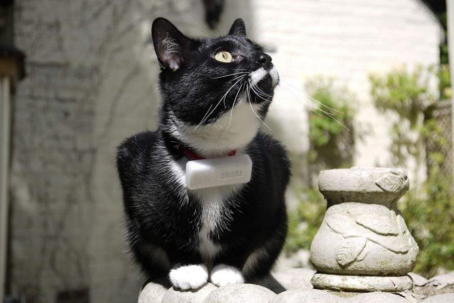 een kat die een gps-tracker draagt